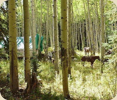 colorado elk hunting camp